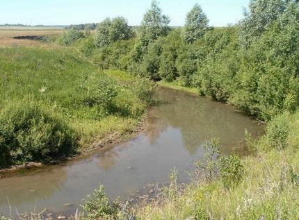 Окунь в небольших речках