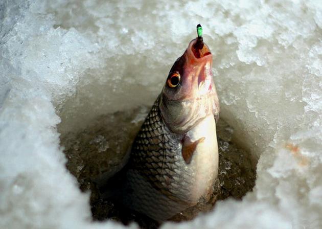 как ловить рыбу зимой - на нимфу