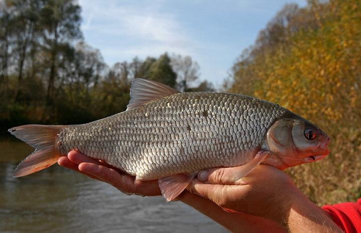 летом на удочку ловится красивая рыба