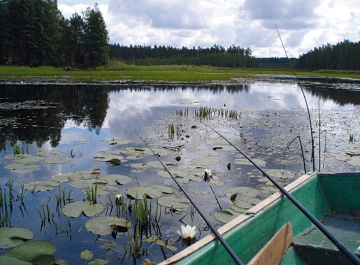 линя легче поймать с лодки